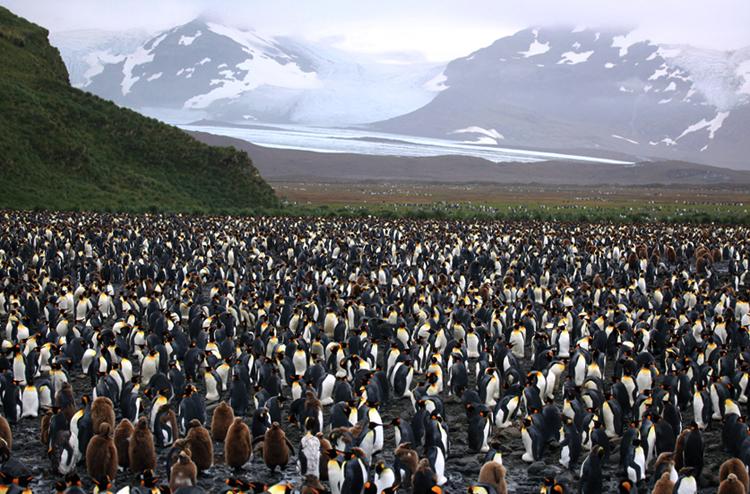 Резерват пингвинов «Пингвин-плэйс»