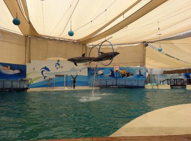 Дельфинарий «Троя»